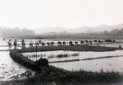 「結い」の田植え風景