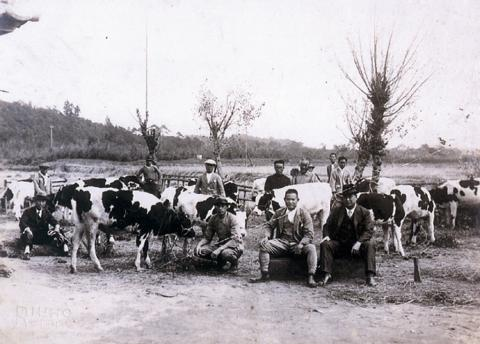 酪農の導入