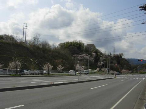 熊野の桜(2008/4/13)