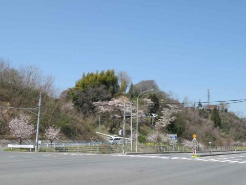 熊野のサクラ(2009/4/10)
